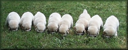 Visit our Puppy Info Page.